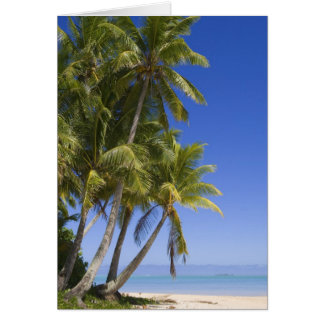 Palm lined beach Cook Islands 3 Card