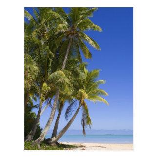 Palm lined beach Cook Islands 3 Postcard
