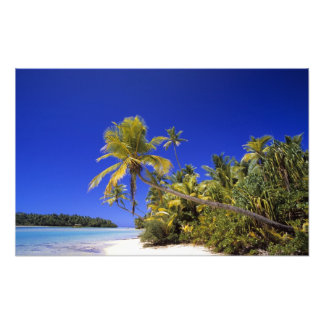 Palm lined beach Cook Islands 4 Photographic Print