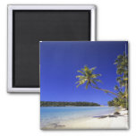 Palm lined beach Cook Islands 5 Magnet