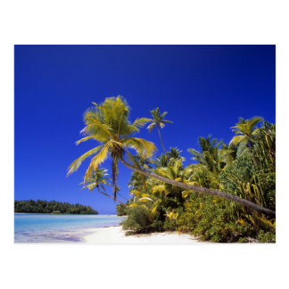 Palm lined beach Cook Islands 7 Postcards