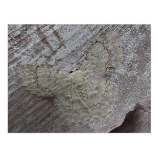 Palm Moth, Papua New Guinea Postcard