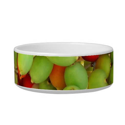 palm nuts green and red. cat water bowl