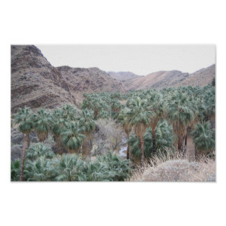 Palm Oasis Poster