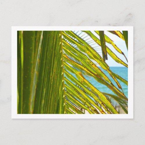 Palm & Ocean Postcard - style 2 postcard