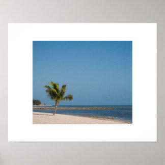 Palm on a Sandy Beach Poster