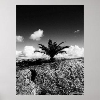 """Palm On Rock"" JTG Art Poster"