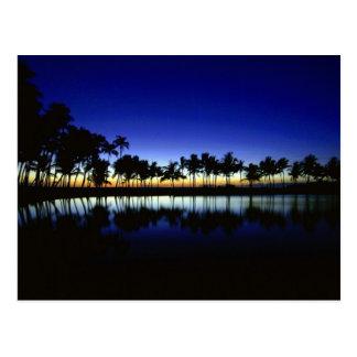 palm_silhouette_big_island_hawaii postcard