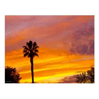 Palm Springs Sunset Postcard