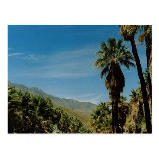 Palm Springs View Postcard