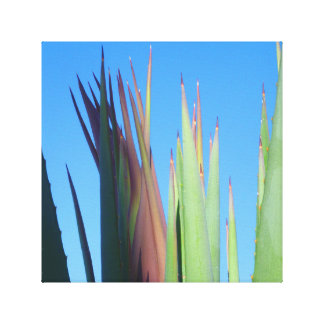 Palm Springs Yucca Canvas Print
