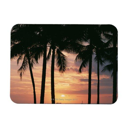 Palm Tree 3 Magnet