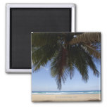 Palm tree along Caribbean Sea. 2 Inch Square Magnet