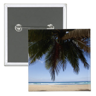 Palm tree along Caribbean Sea. Button