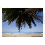 Palm tree along Caribbean Sea. Card