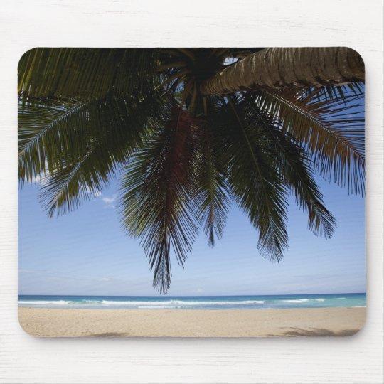 Palm tree along Caribbean Sea. Mouse Pad