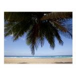 Palm tree along Caribbean Sea. Postcard