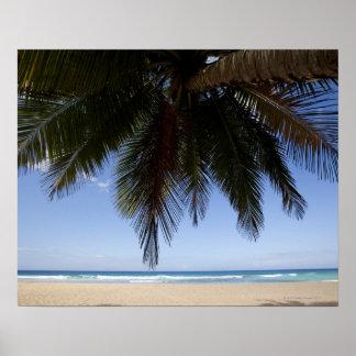 Palm tree along Caribbean Sea. Poster