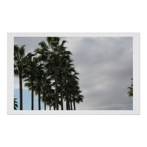 Palm Tree and Clouds Poster
