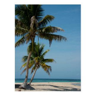 Palm tree and white sand beach postcard