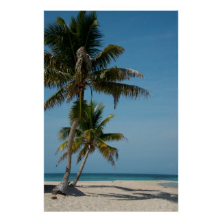 Palm tree and white sand beach poster