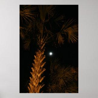 Palm tree at night. poster