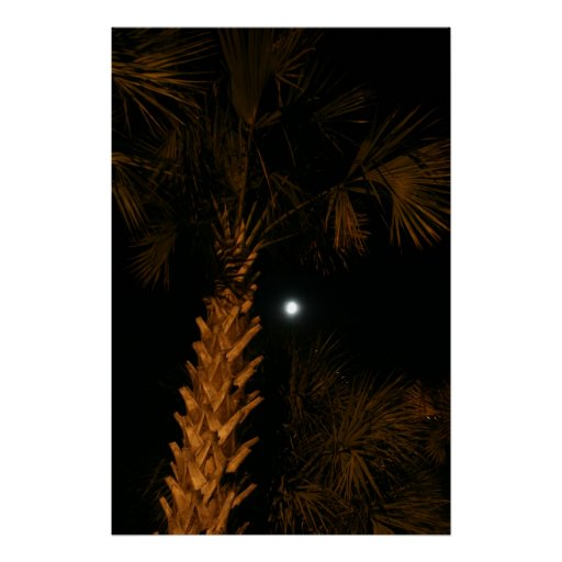 Palm tree at night. posters