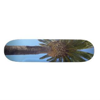 Palm Tree at San Diego, CA Skateboard Deck