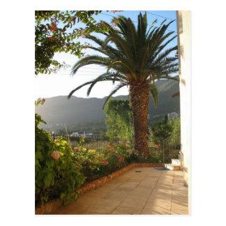 Palm Tree At Sunset On Corfu Island Postcard
