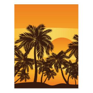 Palm Tree at Sunset Postcard