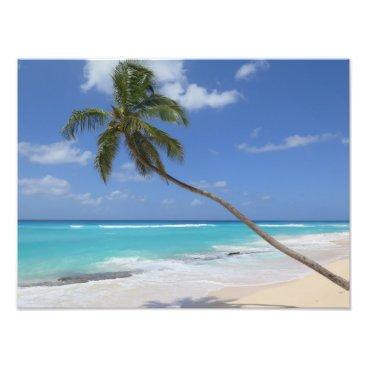 Palm tree beach caribbean photo print