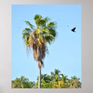 Palm Tree Birds Crow Poster Print