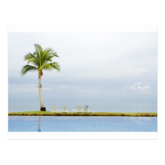Palm tree by a swimming pool postcard