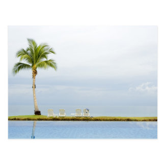 Palm tree by a swimming pool post card