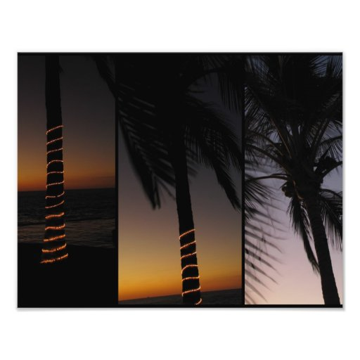 Palm Tree Collage Photograph