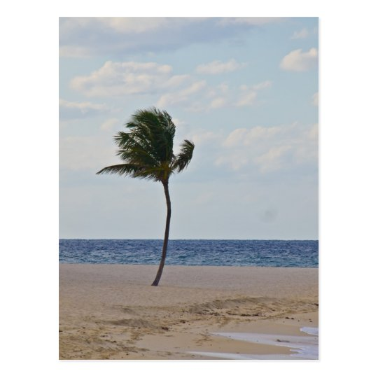 Palm Tree Enjoying the Beach Postcard