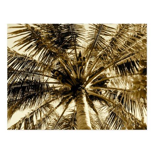 Palm Tree Fan Postcard