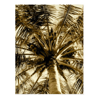 Palm Tree Fan Postcard