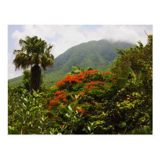 Palm Tree Flamboyant Tree Caribbean Volcano Peak Post Cards