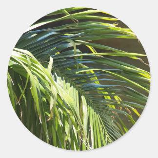 Palm tree Fronds Classic Round Sticker