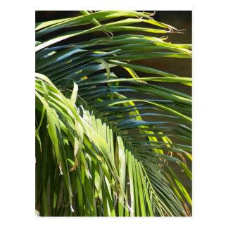 Palm tree Fronds Postcard