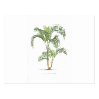 Palm tree illustration collection post card