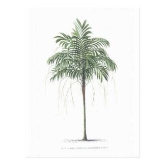 Palm tree illustration Collection Postcard