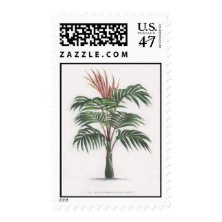 Palm tree illustration II Collection Postage