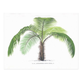 Palm tree illustration III Collection Postcard