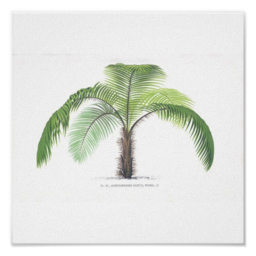 Palm tree illustration III Collection Poster