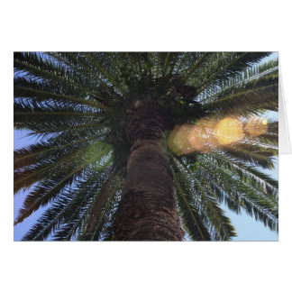 Palm tree in Delray Beach Card