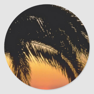 Palm Tree In Late Afternoon Classic Round Sticker