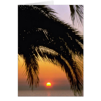 Palm Tree In Late Afternoon Greeting Cards