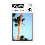 Palm Tree in Orlando Florida Postage Stamps